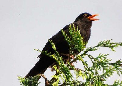 vogelwelt_(5)