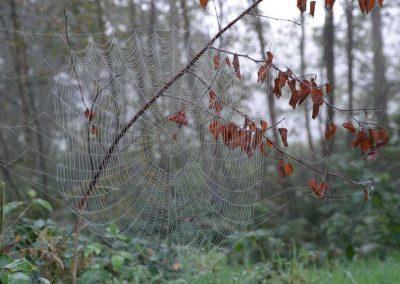 spinnweben_(10)