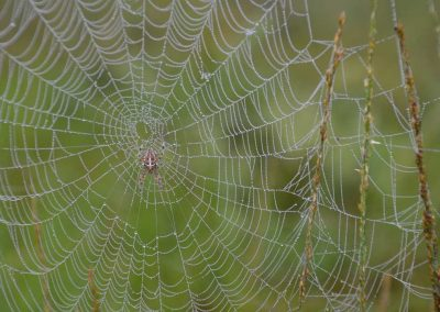 spinnweben_(7)