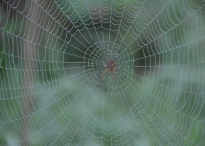 spinnweben_(8)